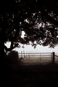 Foggy Autumn morning, Gate to a field