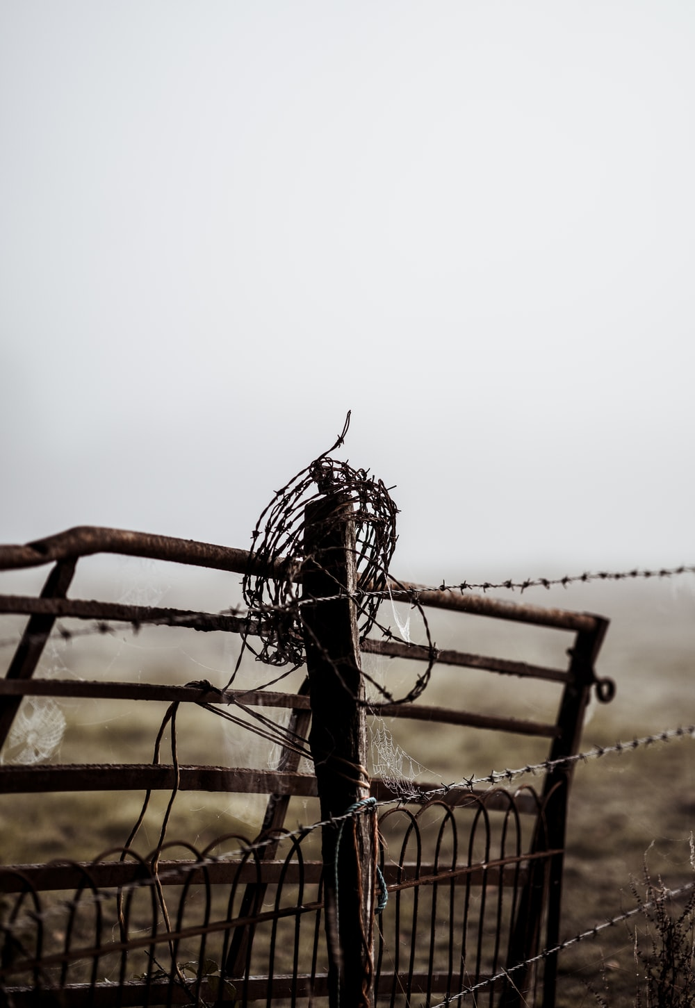 Wire Fence Pictures | Download Free Images on Unsplash