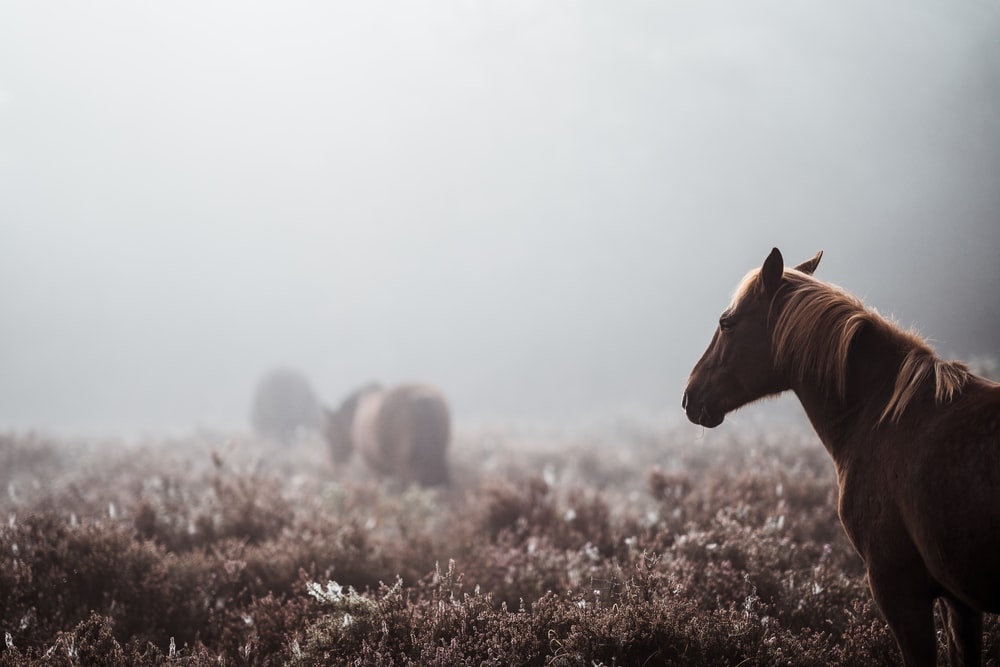 black horse surrounded by fog