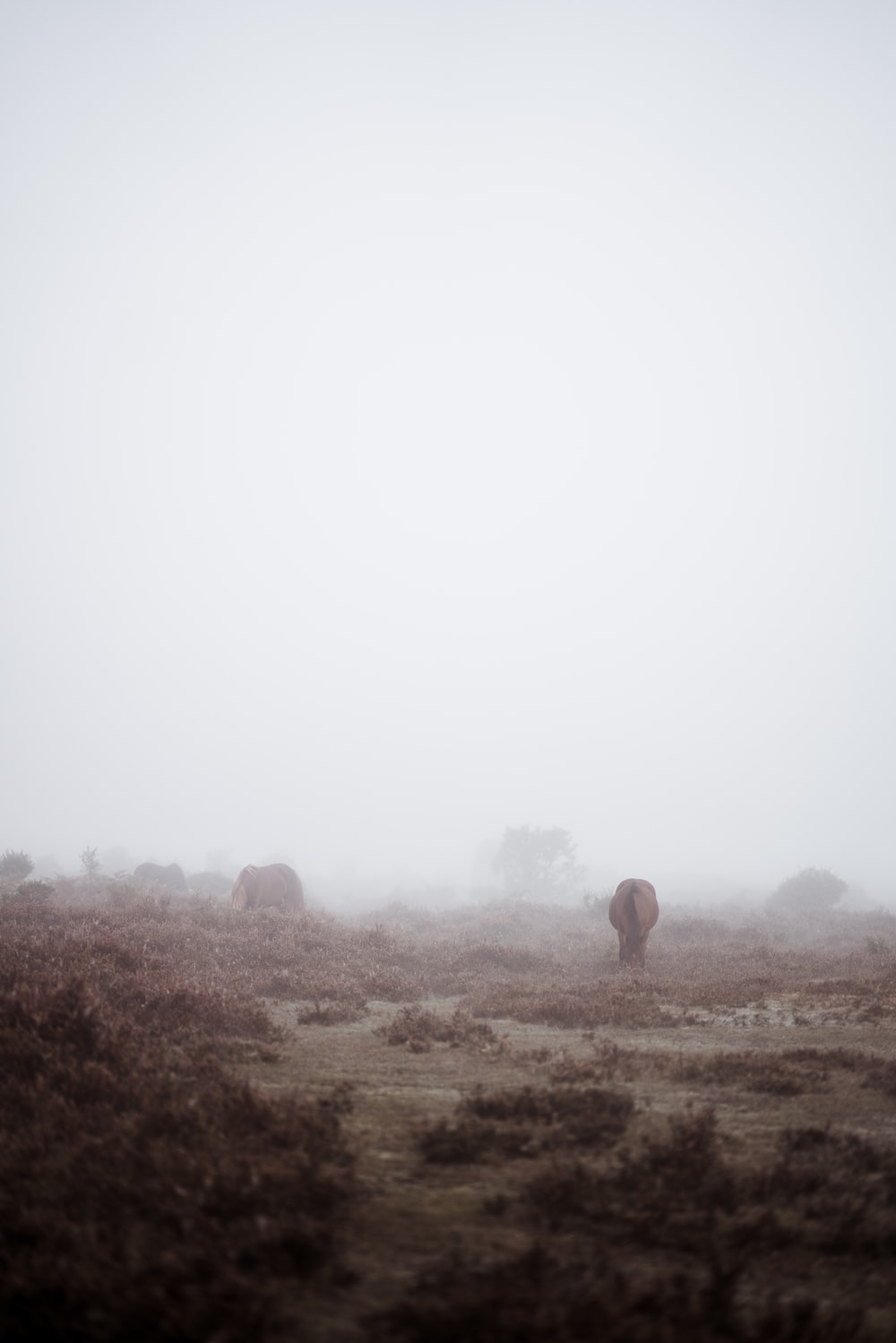 area covered in white fog]