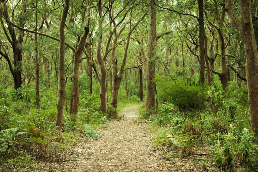Hiking trail in Royal national park