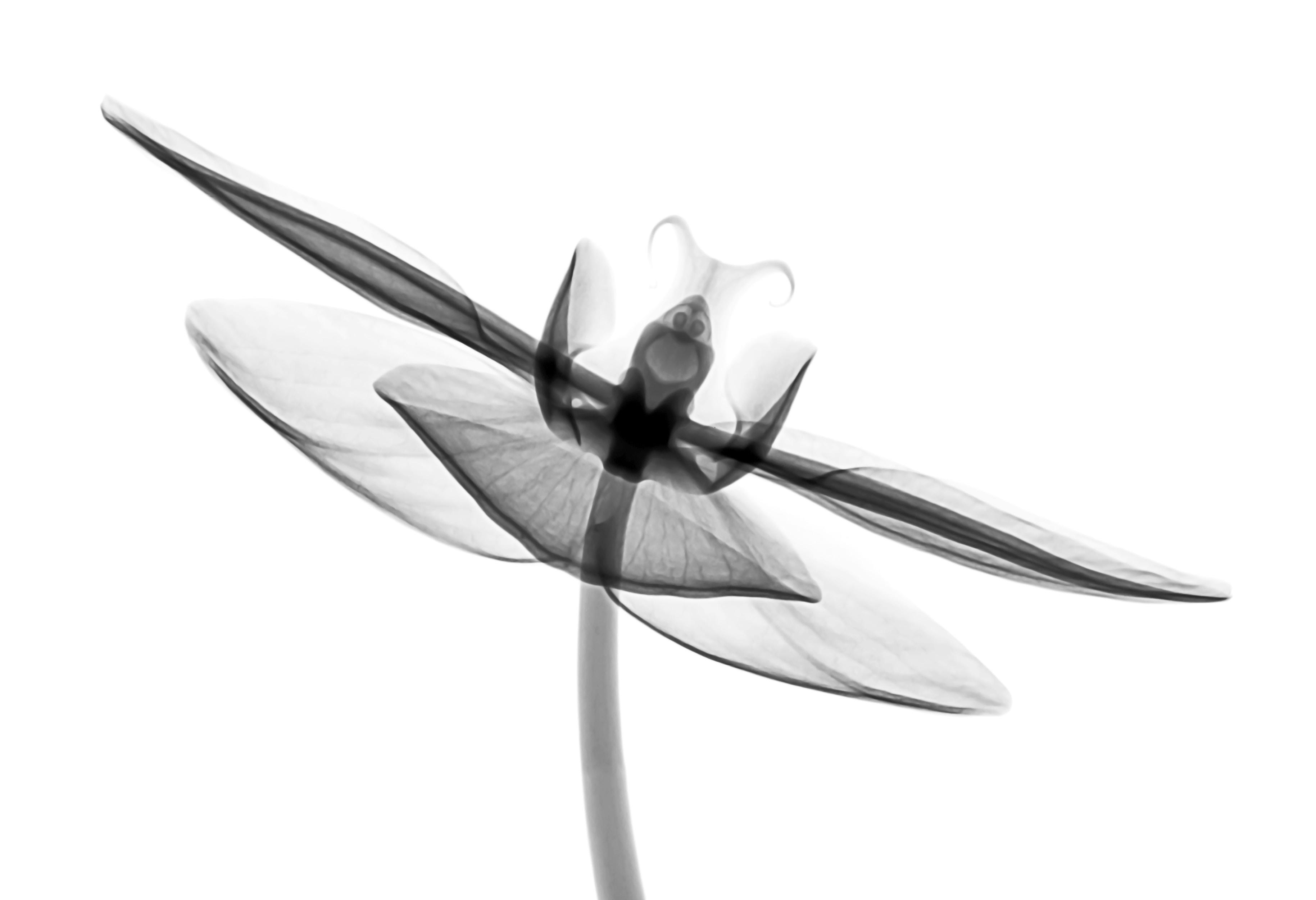 gray and white artwork