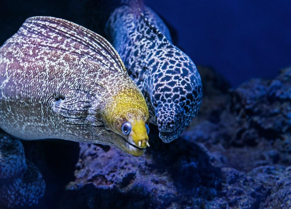 brown and white underwater creature