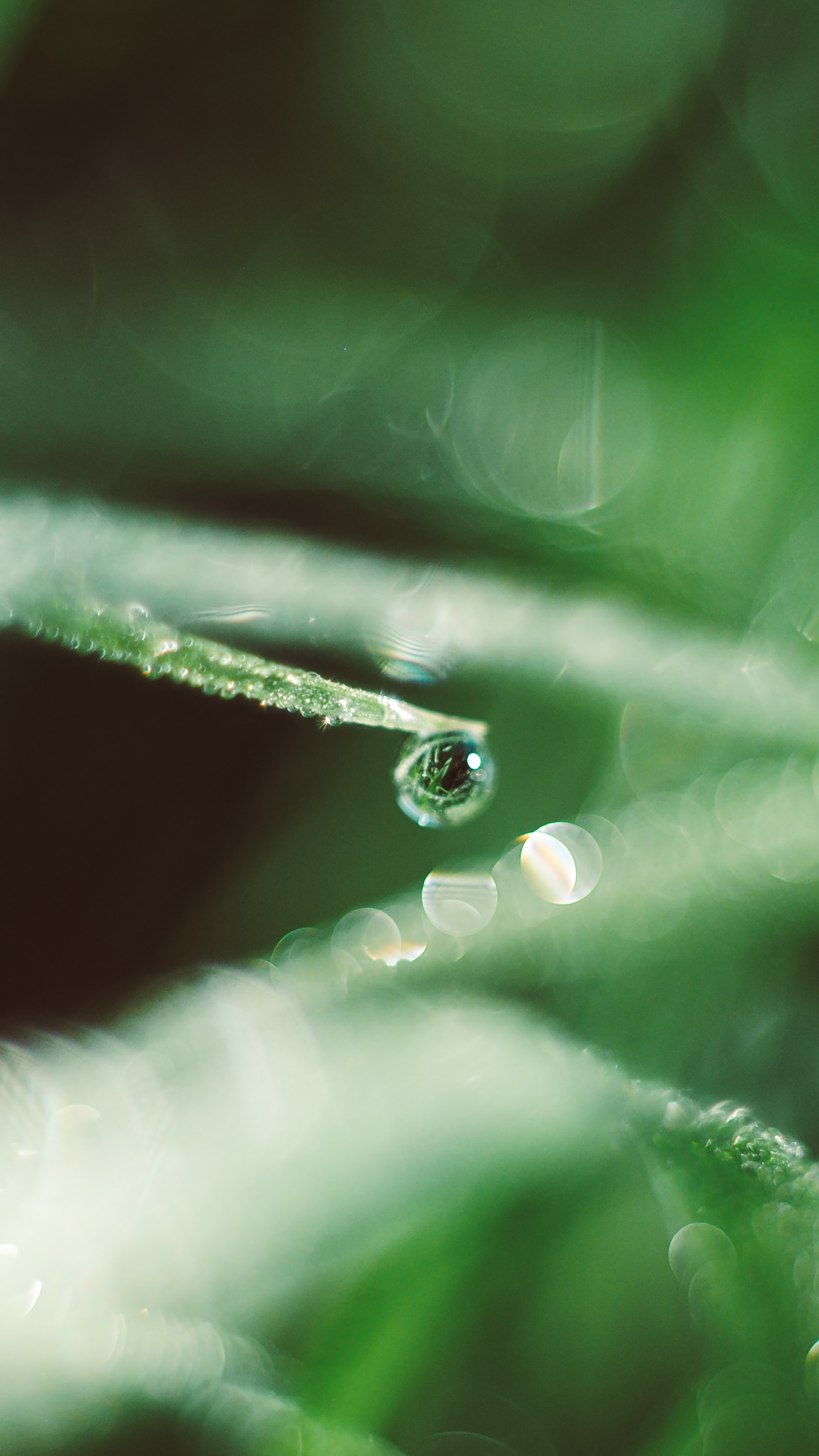 selective focus photography of tear drop