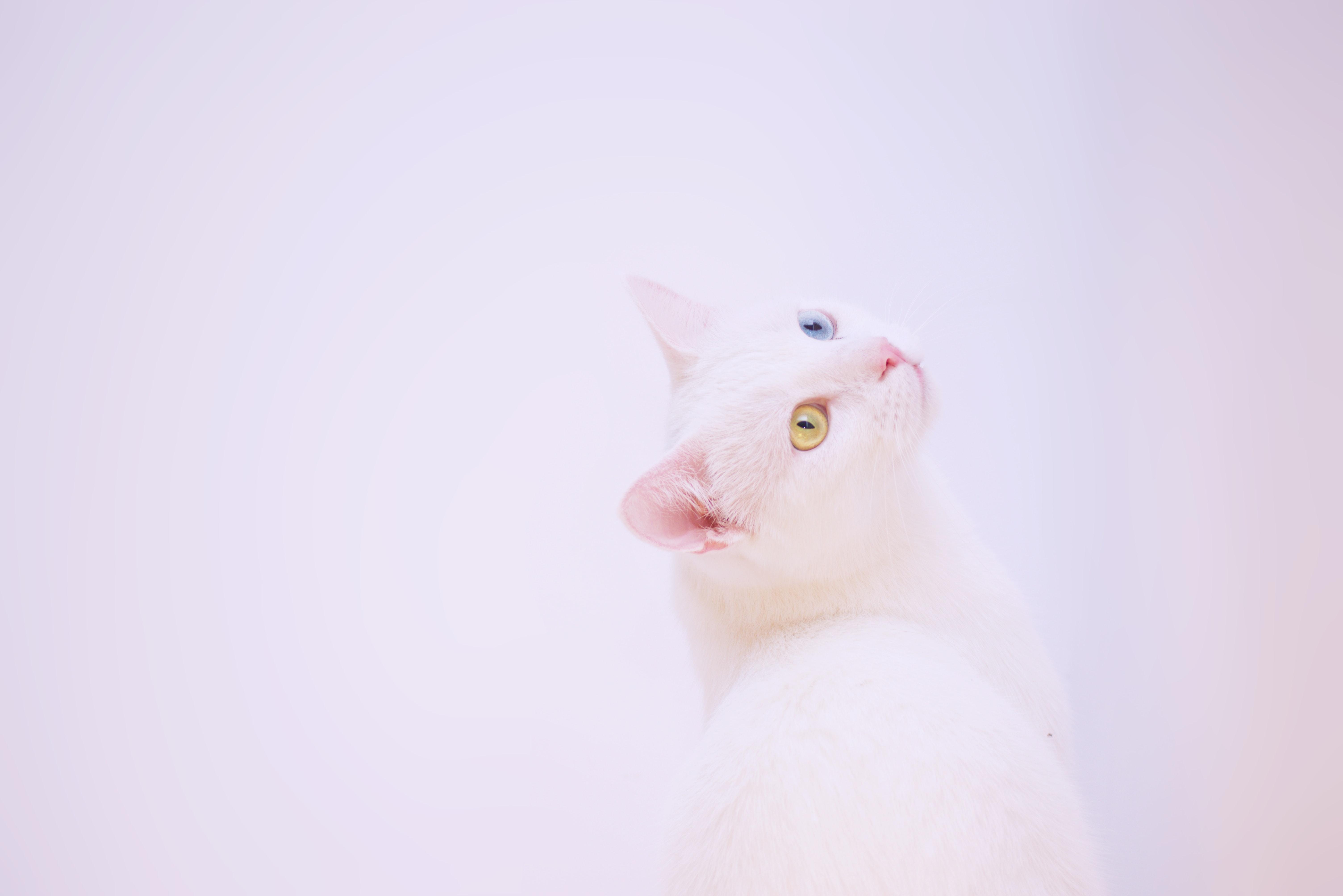 short-fur white cat beside white surface
