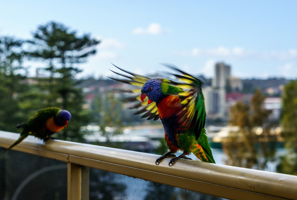 selective focus photography of two birds