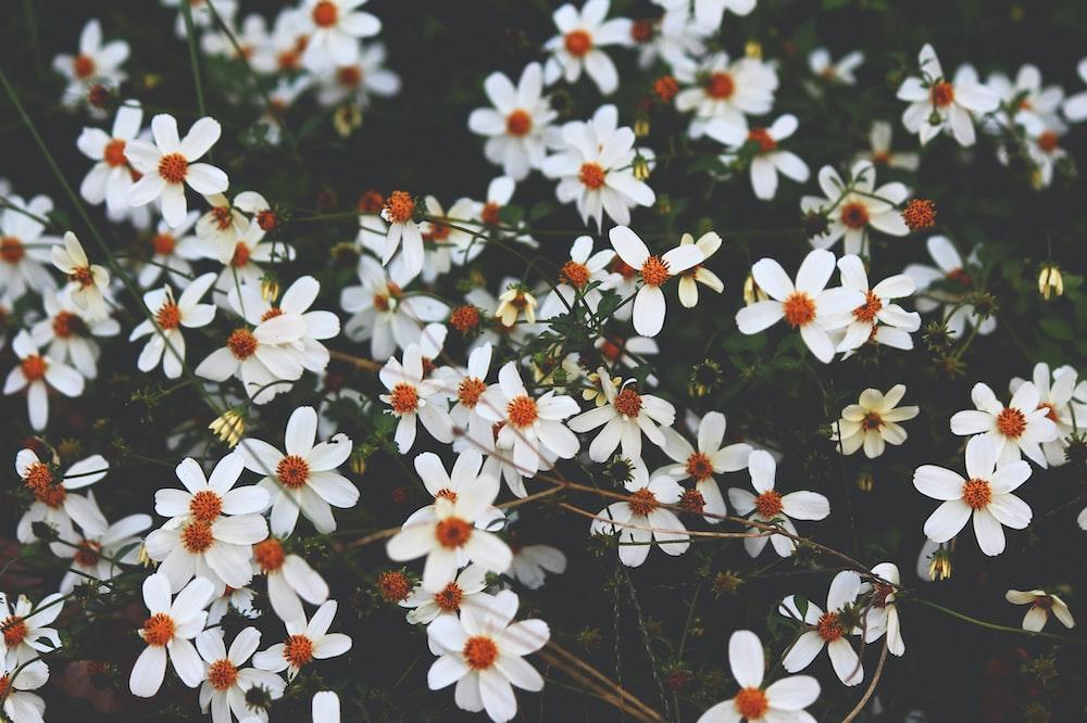 white petaled flower lot