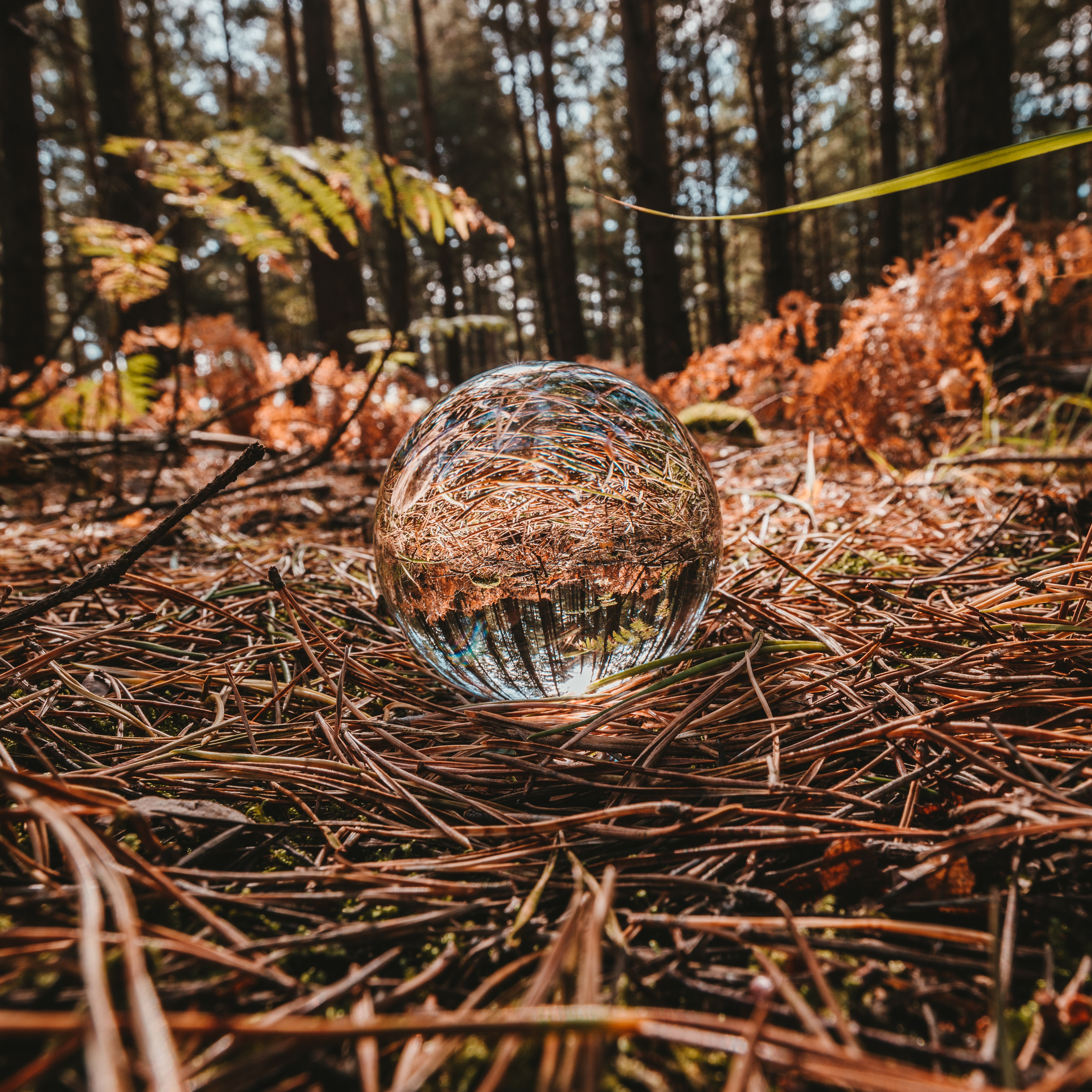 closeup photography of sphere on twigs