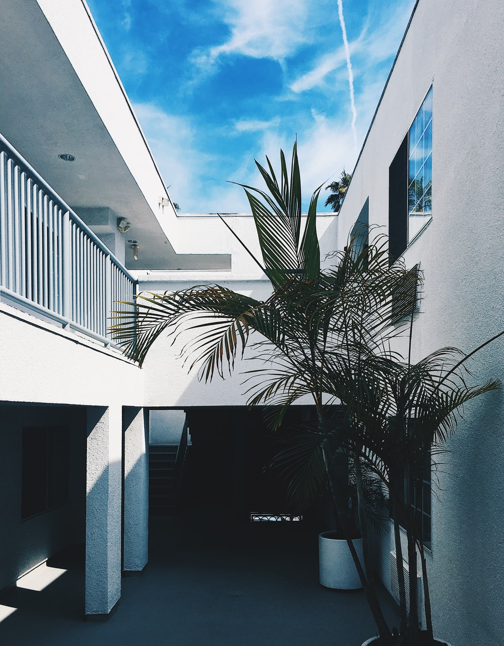 palm tree near concrete wall