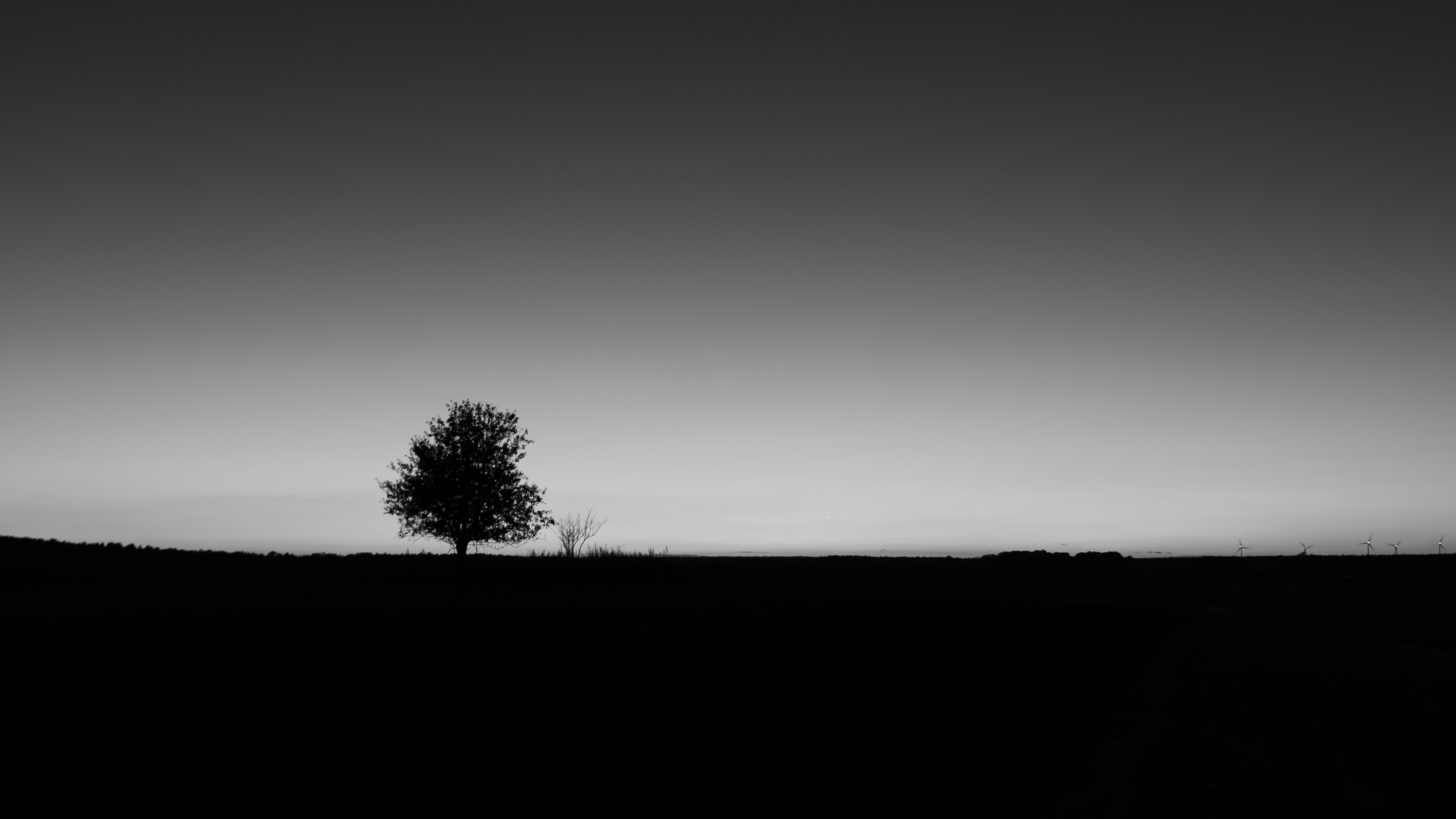 grayscale photo of silhouette of tree