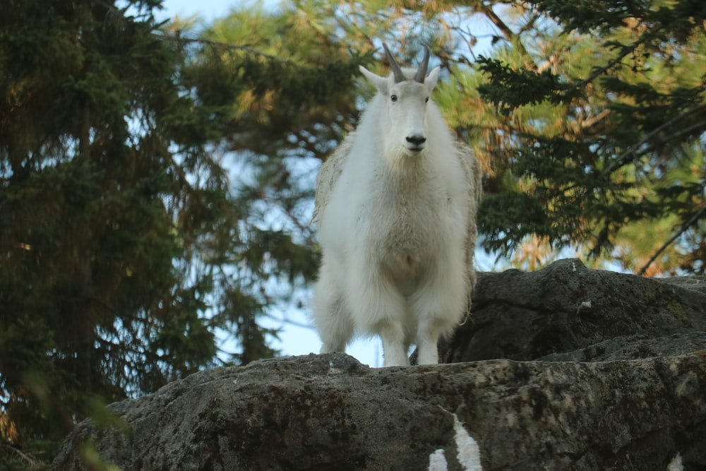 white animal standing during daytime