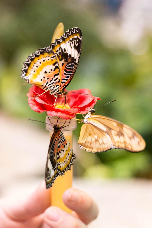 three yellow butterflies
