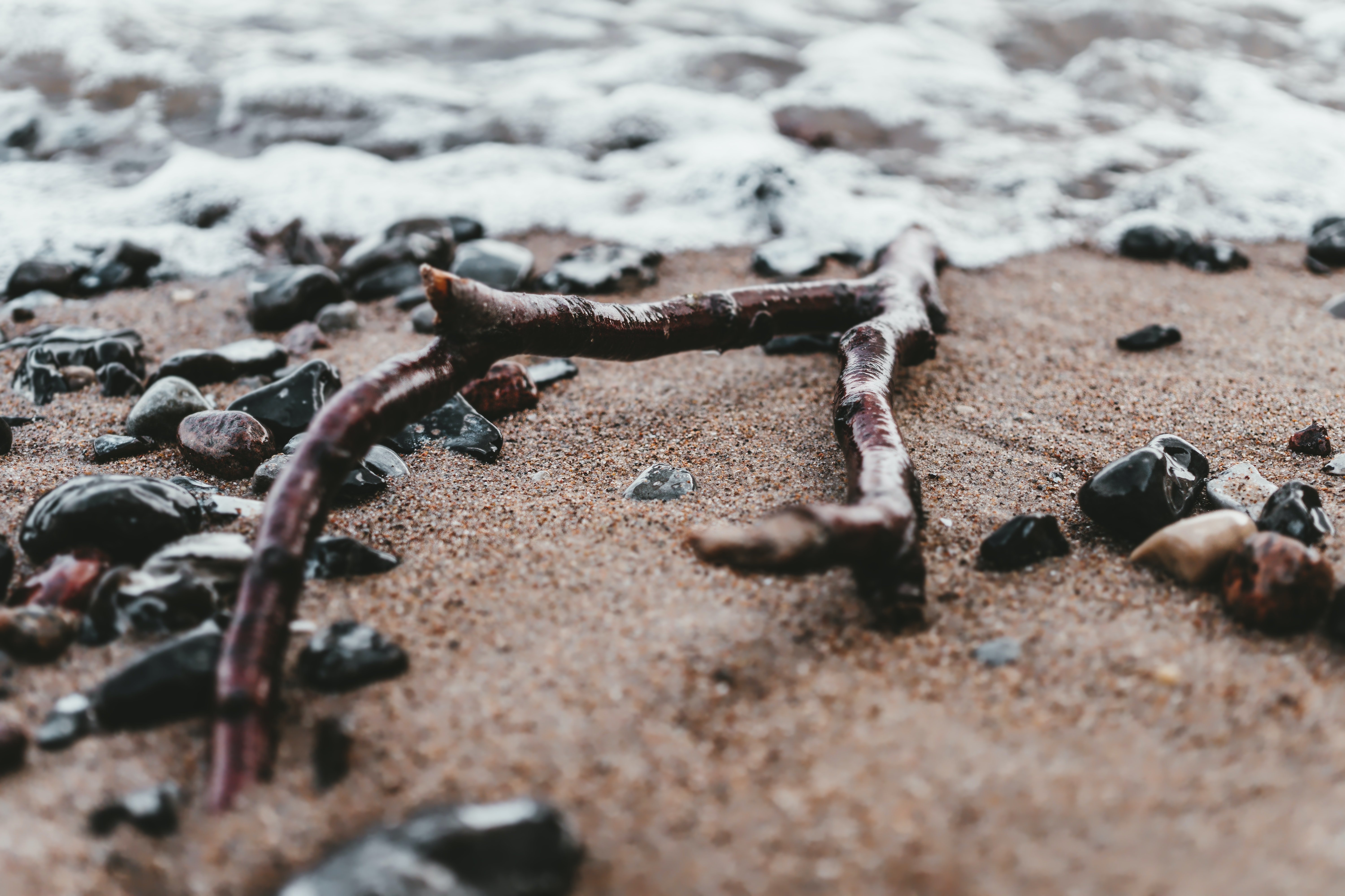 brown driftwood on shore