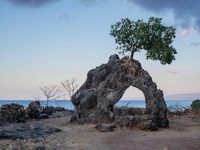 green tree timor-leste zoom background
