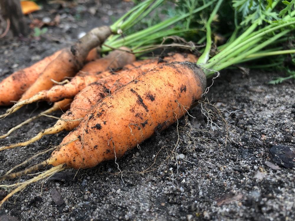 close-up photo of orange carrots