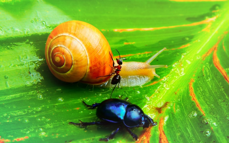 brown and shell and blue beetle on green leaf