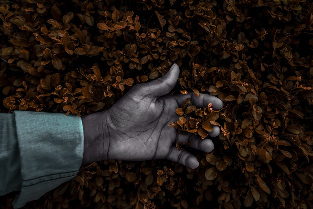person's hand on dried leaves