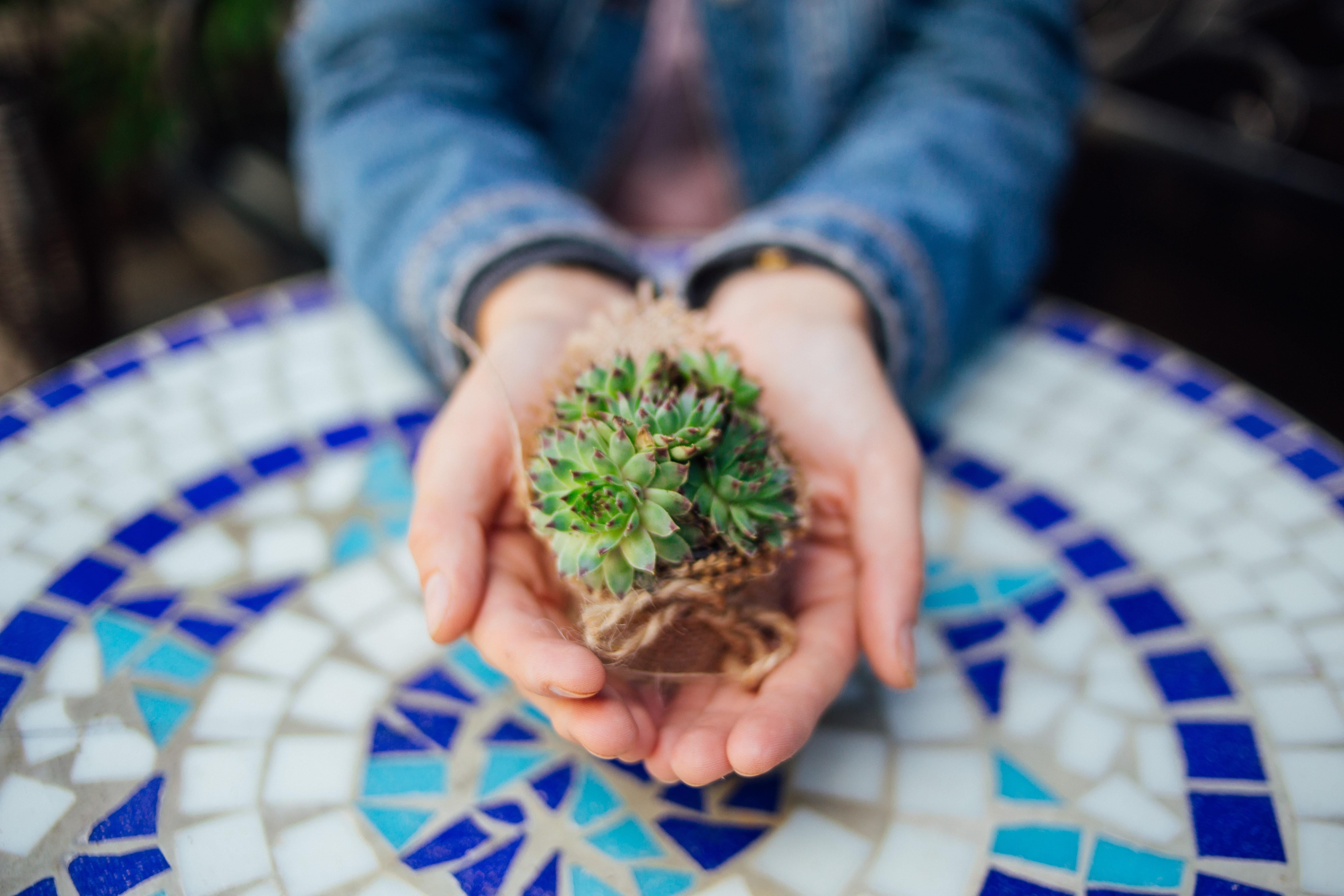 person holding green succulents