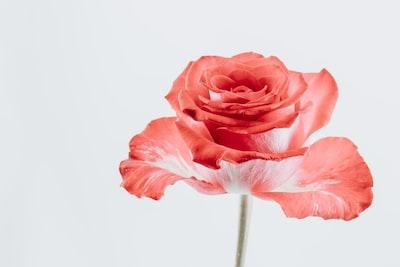 3990. Virágok