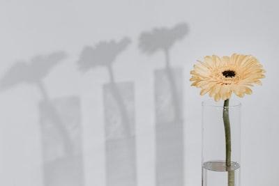 3962. Virágok