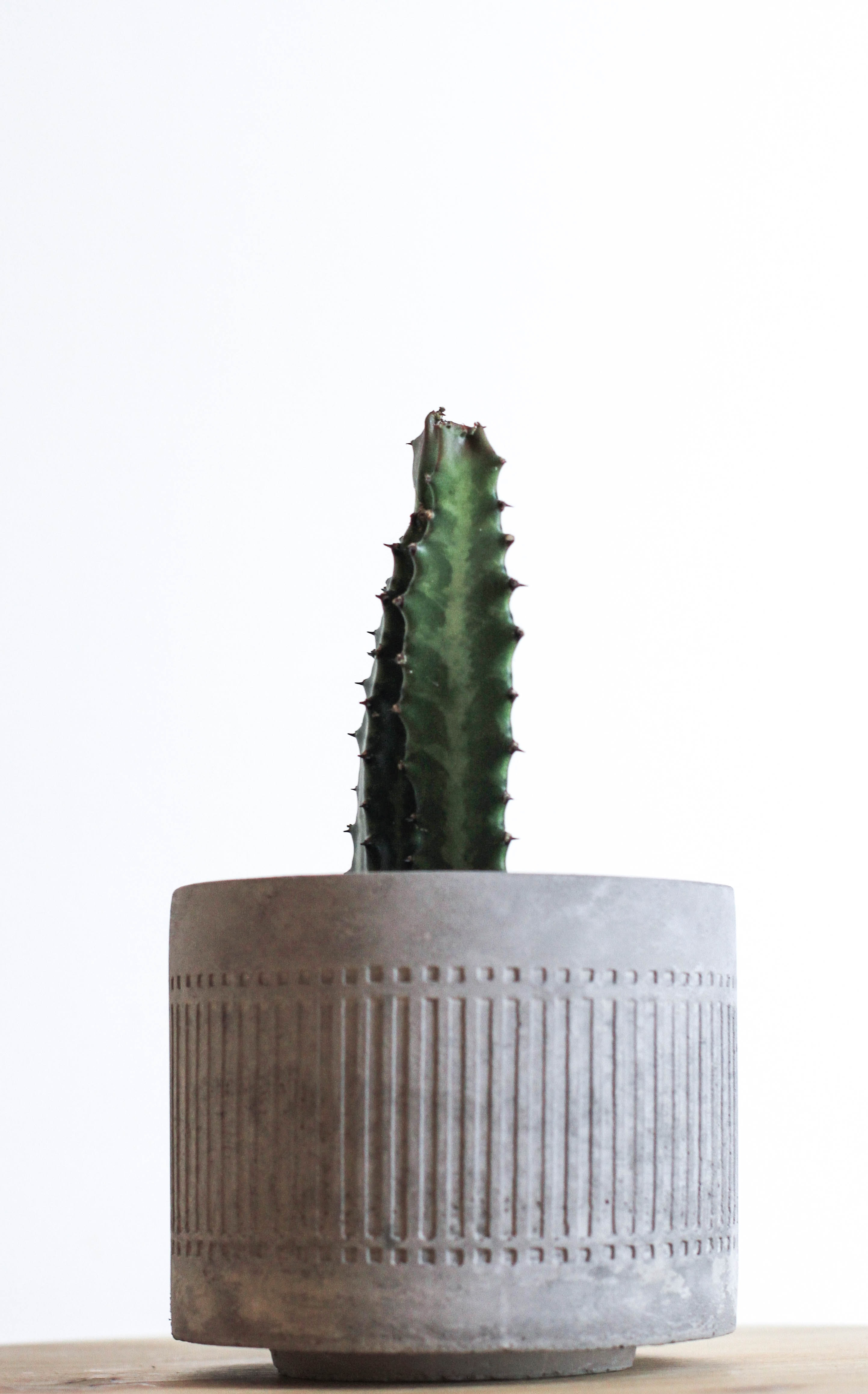 potted green cactus plant
