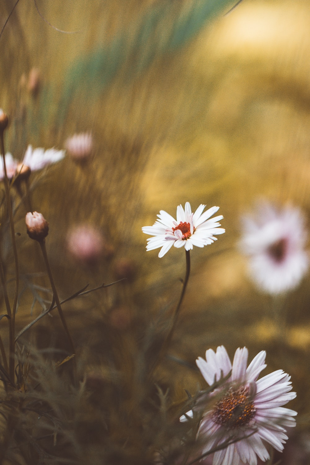 Small White Flower Pictures Download Free Images On Unsplash