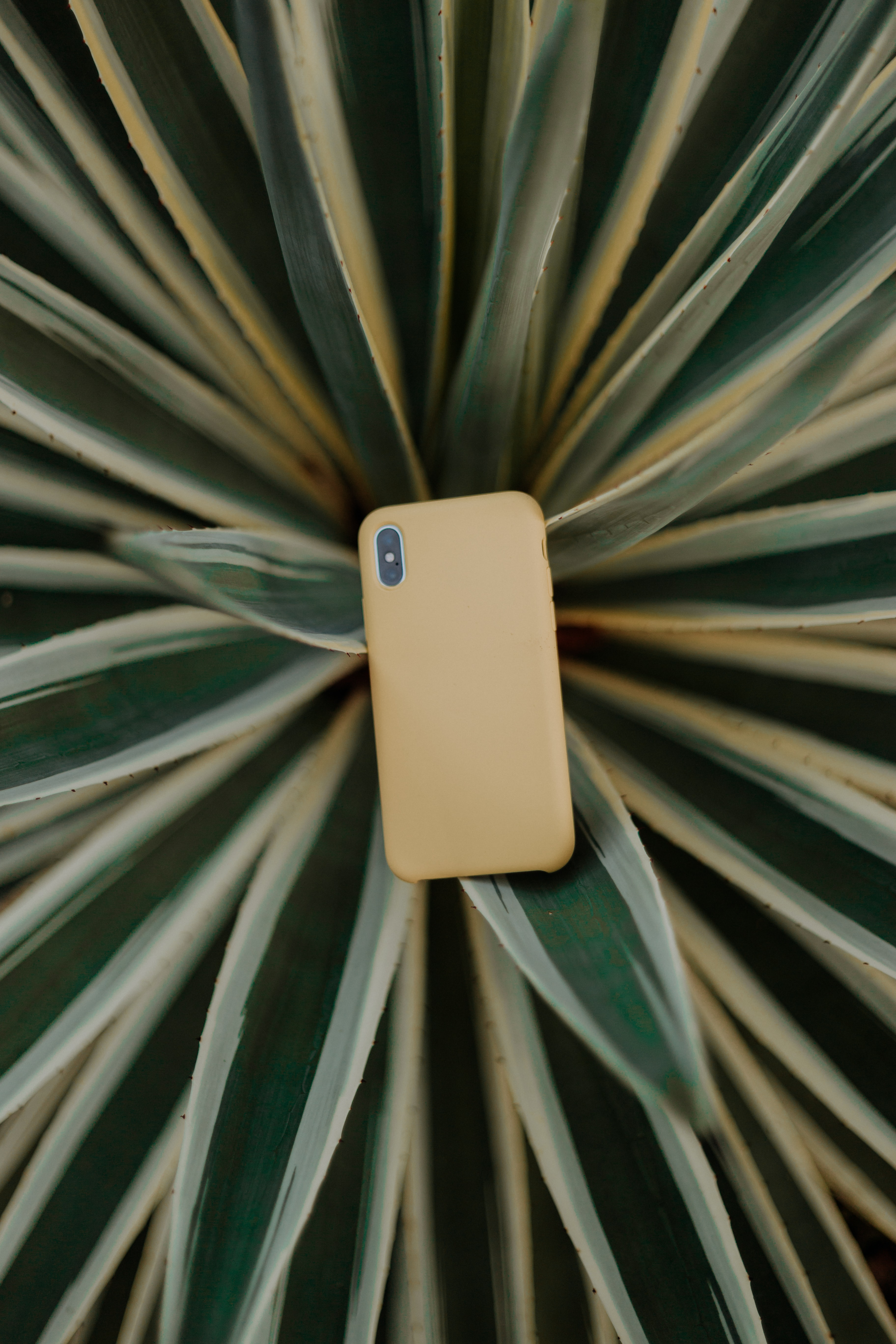gold smartphone on green snake plant