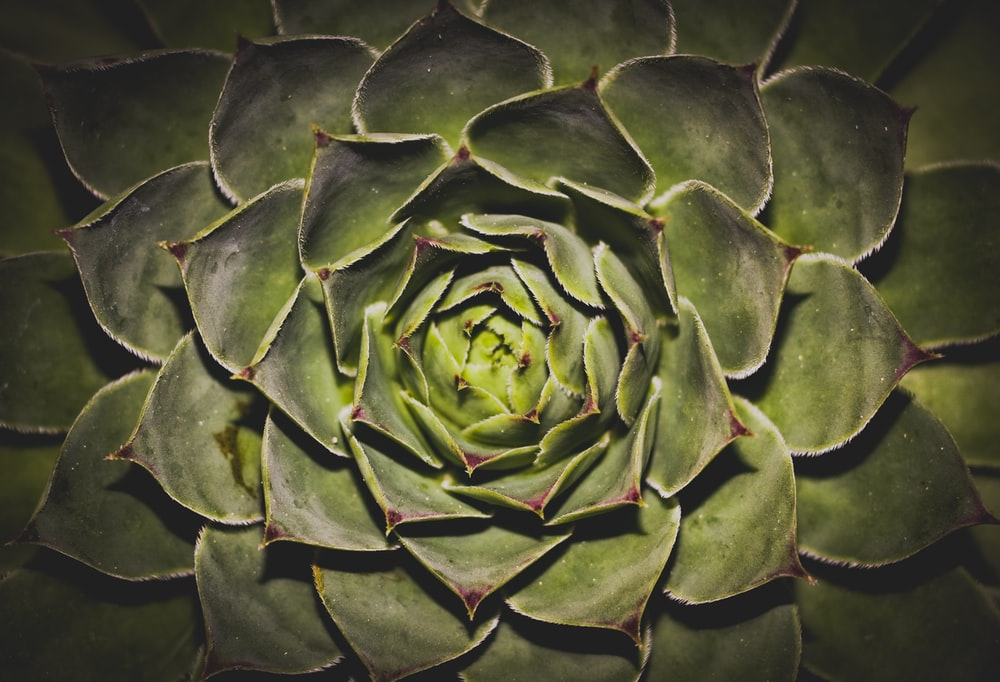 green succulent plant in closeup photography