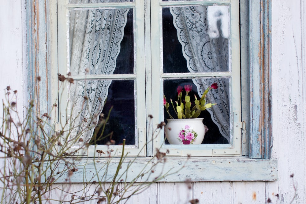 red petal flower in vase on window