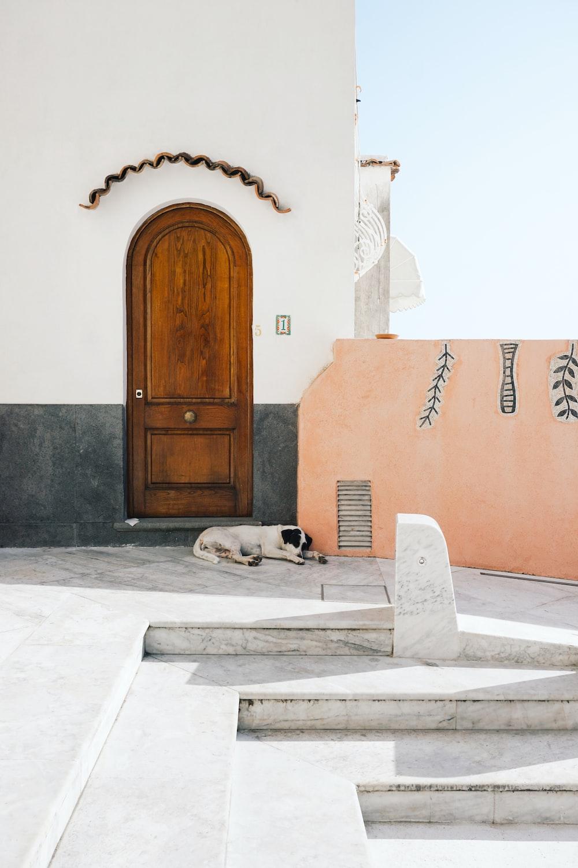 short-coated white and black dog sleeping at doorstep