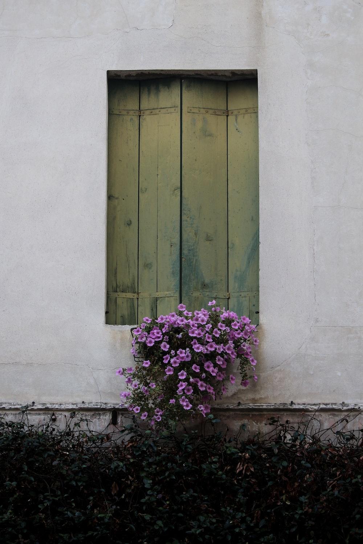 pink petaled flowers near window