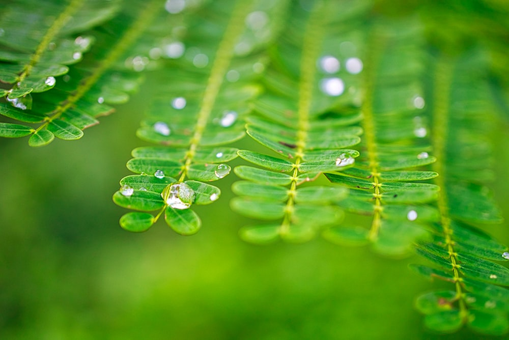 close up photography of leaves with water drop