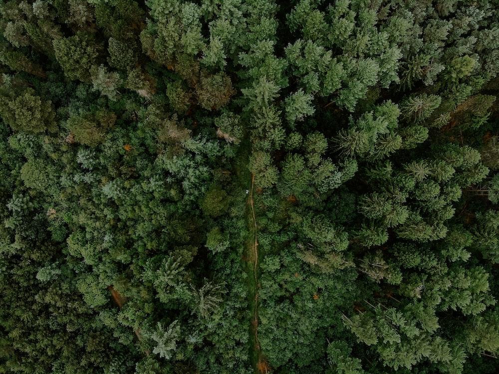 bird's-eye photography of trees