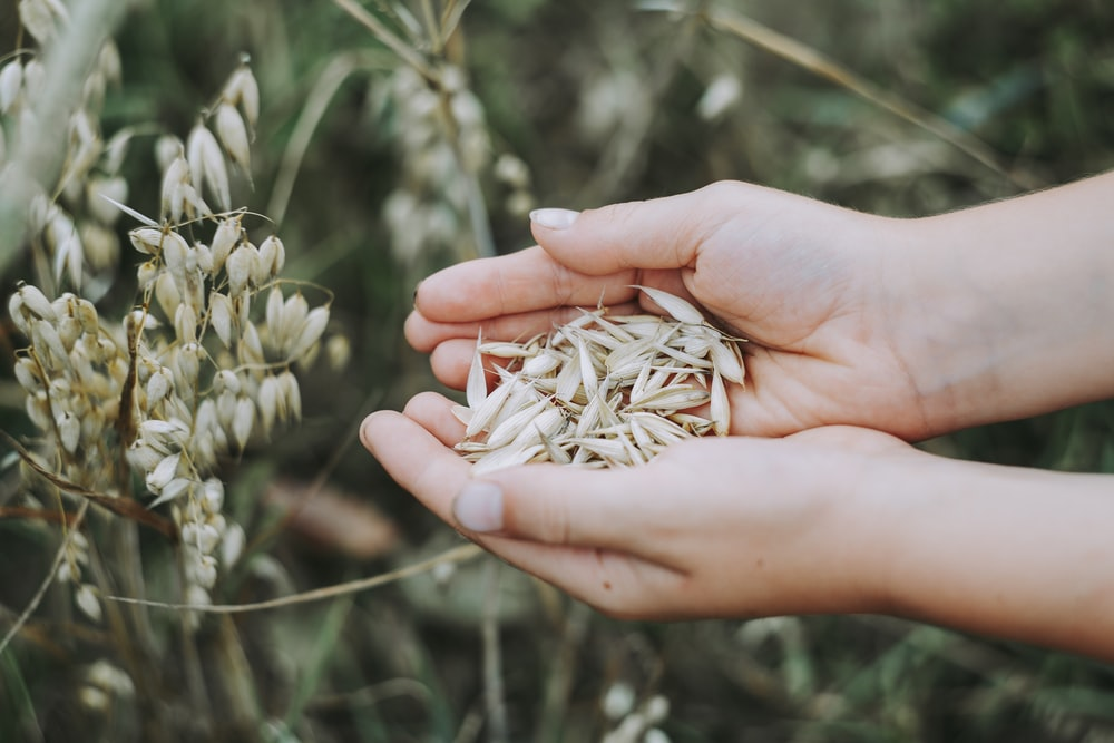 person holding seeds