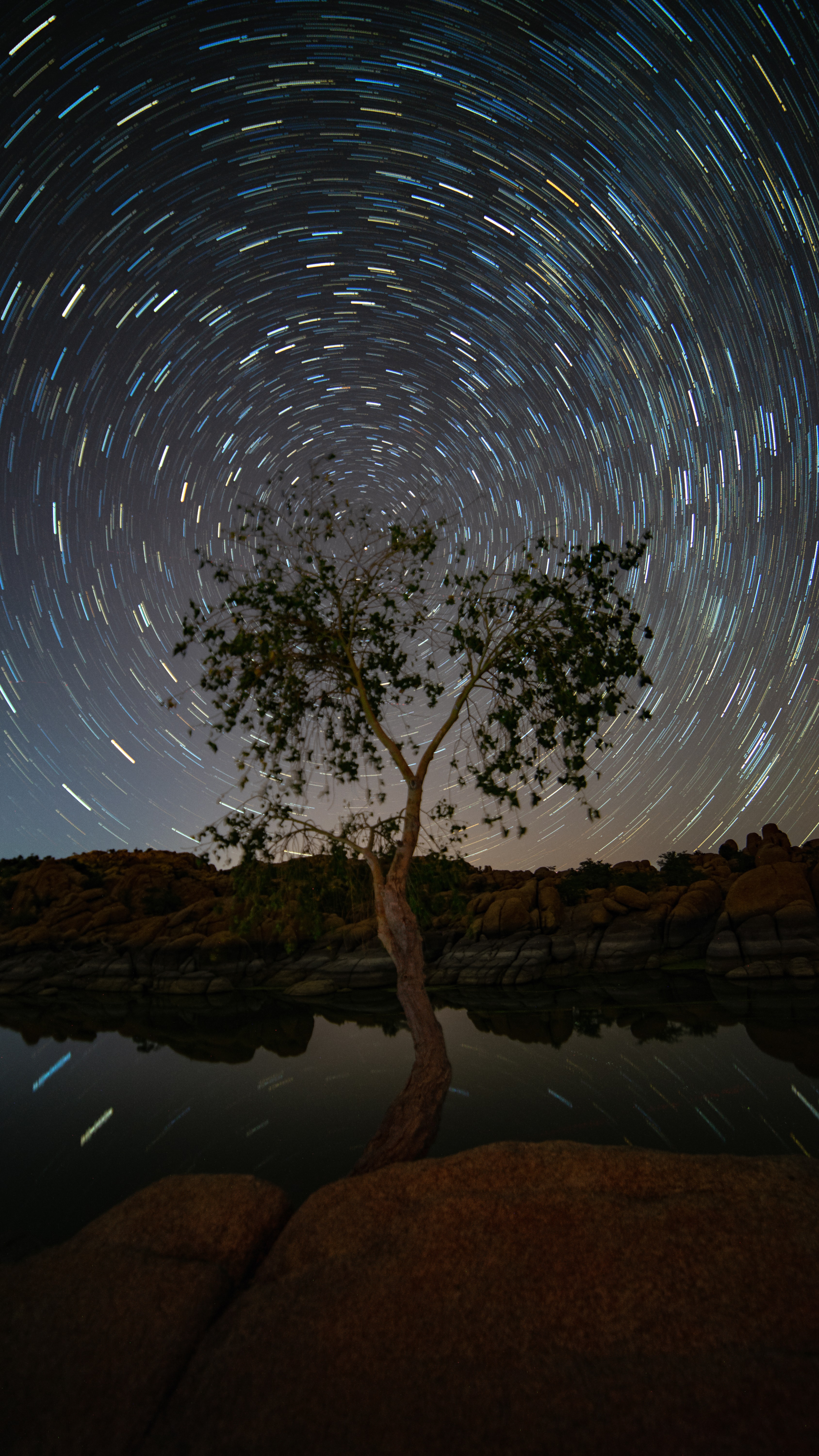 time lapse photography of tree