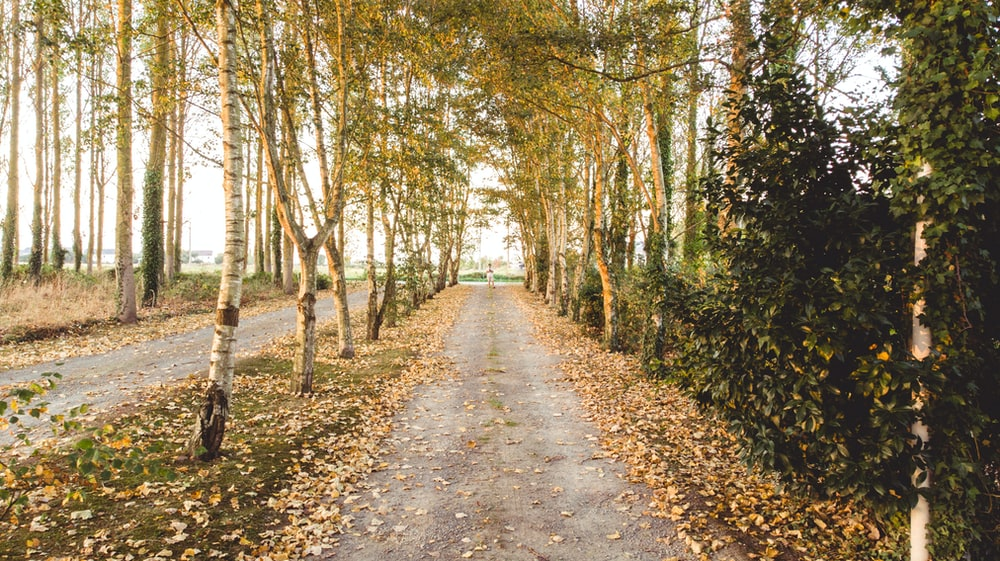 pathway surrounded by trees during daytime
