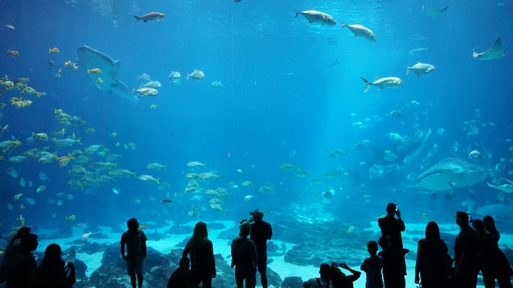 Do Aquariums support Ocean Conservation?