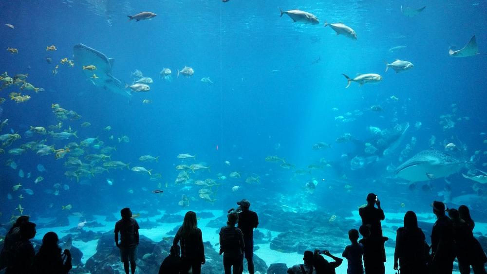 silhouette of people watching at aquarium