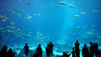 silhouette of people watching at aquarium aquarium teams background