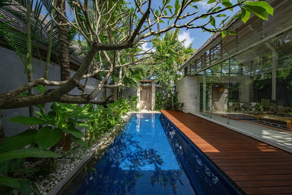 clean swimming pool near green leafed tree
