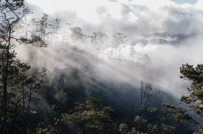 forest covered with fogs dominican republic teams background