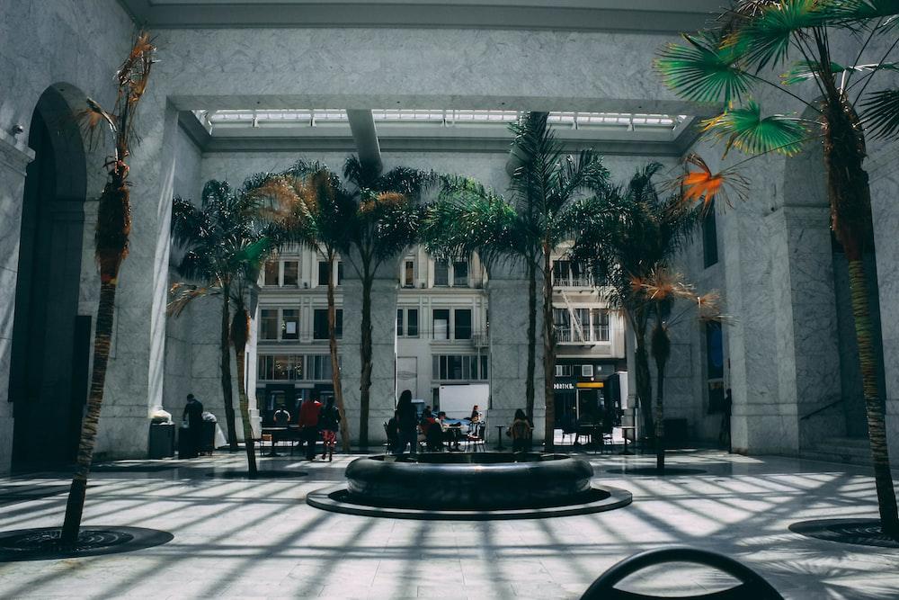 palm tree near concrete walls