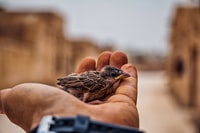 shallow focus photography of sparrow