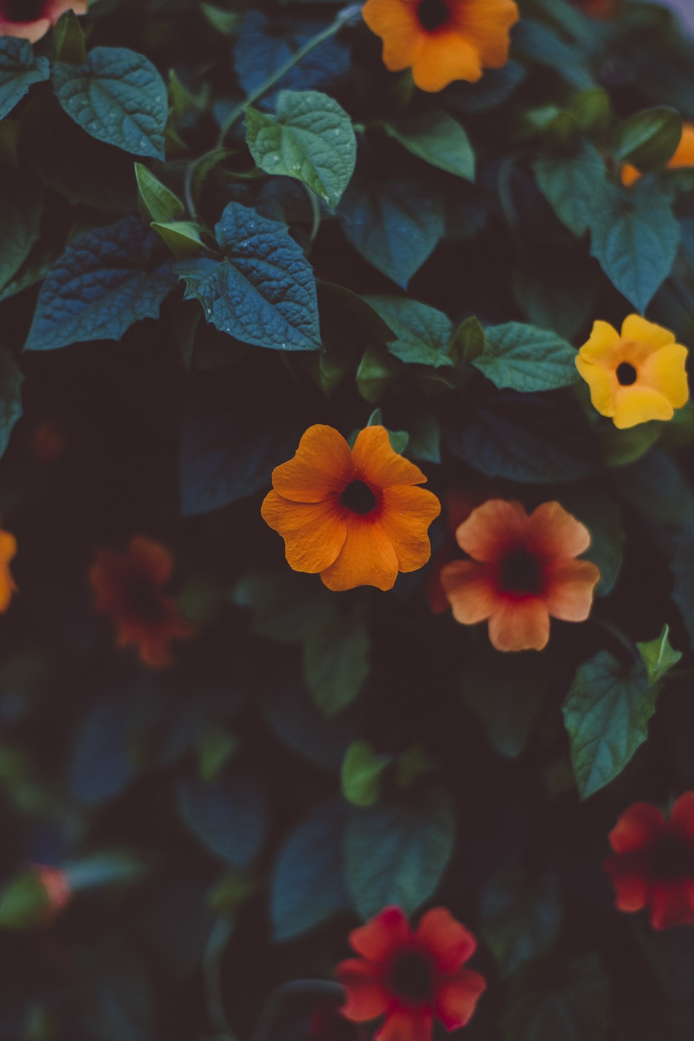 yellow, red, and orange colored flowers