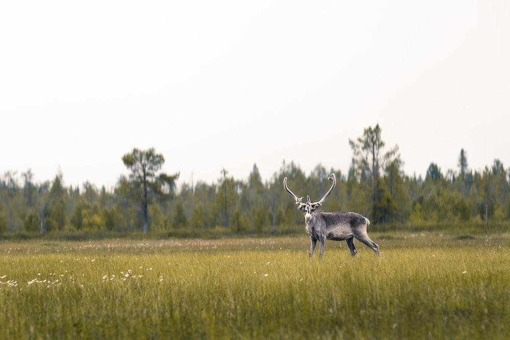 brown deer on grass field during daytime