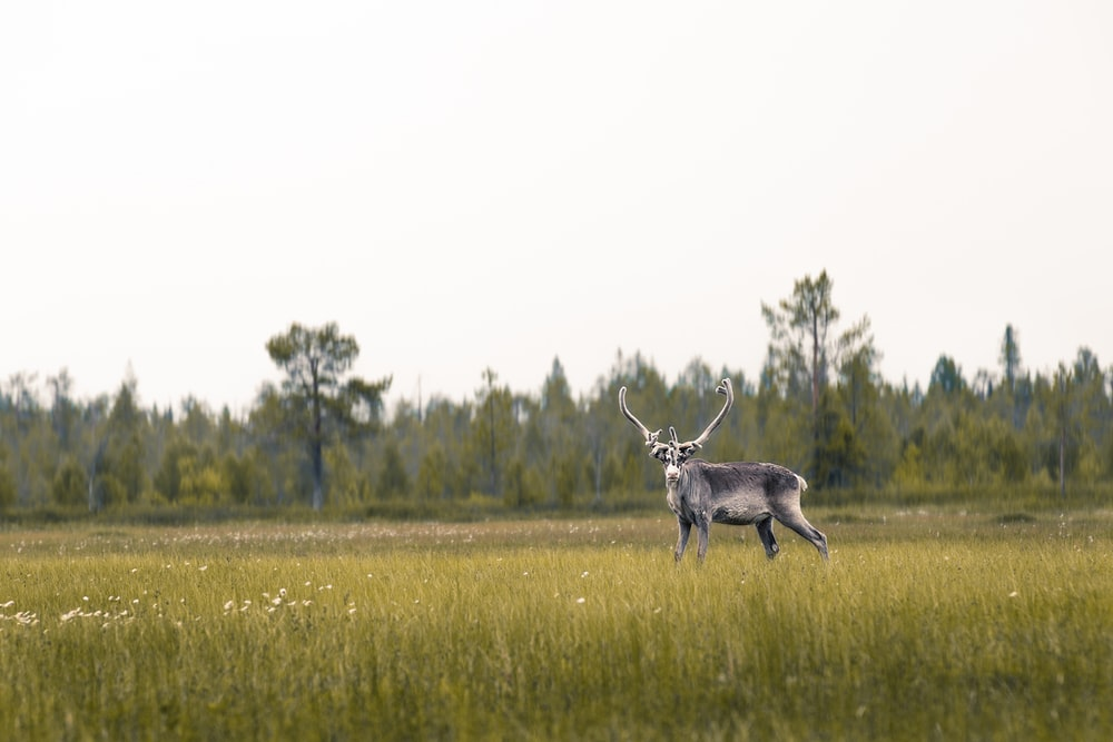 brown deer on grass field during daytime