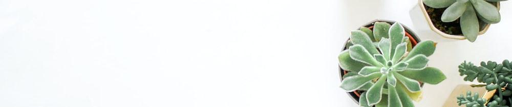 Beluga.fi header image