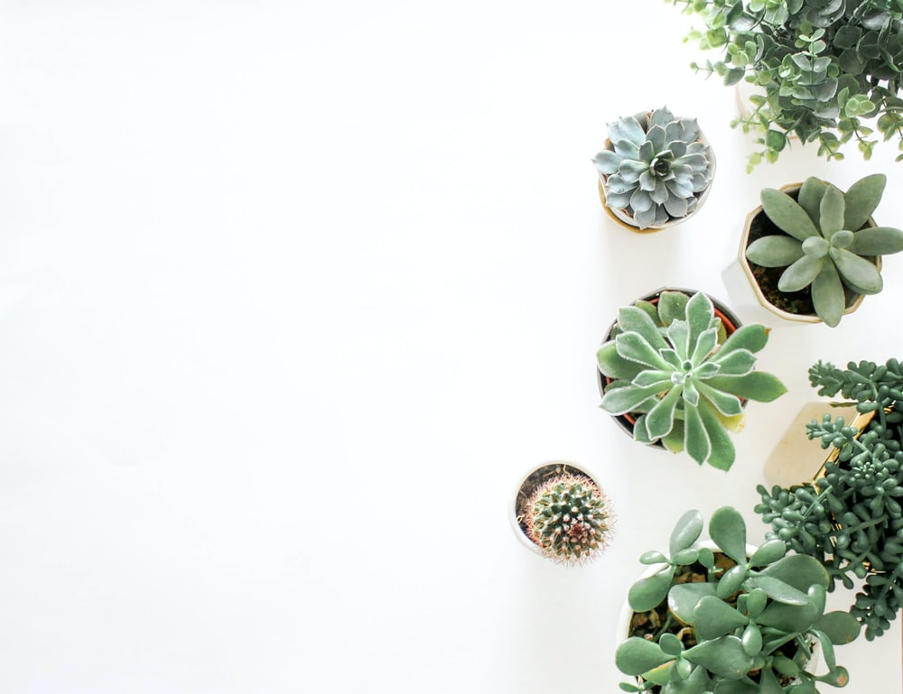green succulent plant near plant