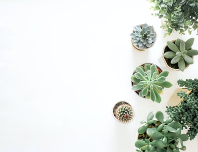 green succulent plant near plant flatlay zoom background