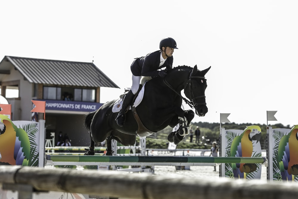 jockey on black horse